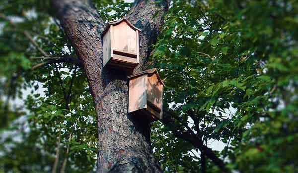 hang a bat house